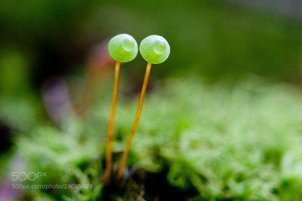 Photograph lichen by JinHyouk Chang on 500px