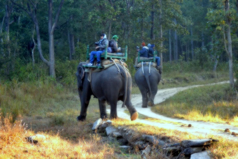 Photograph Elephant ride by Abhinandan Shukla on 500px