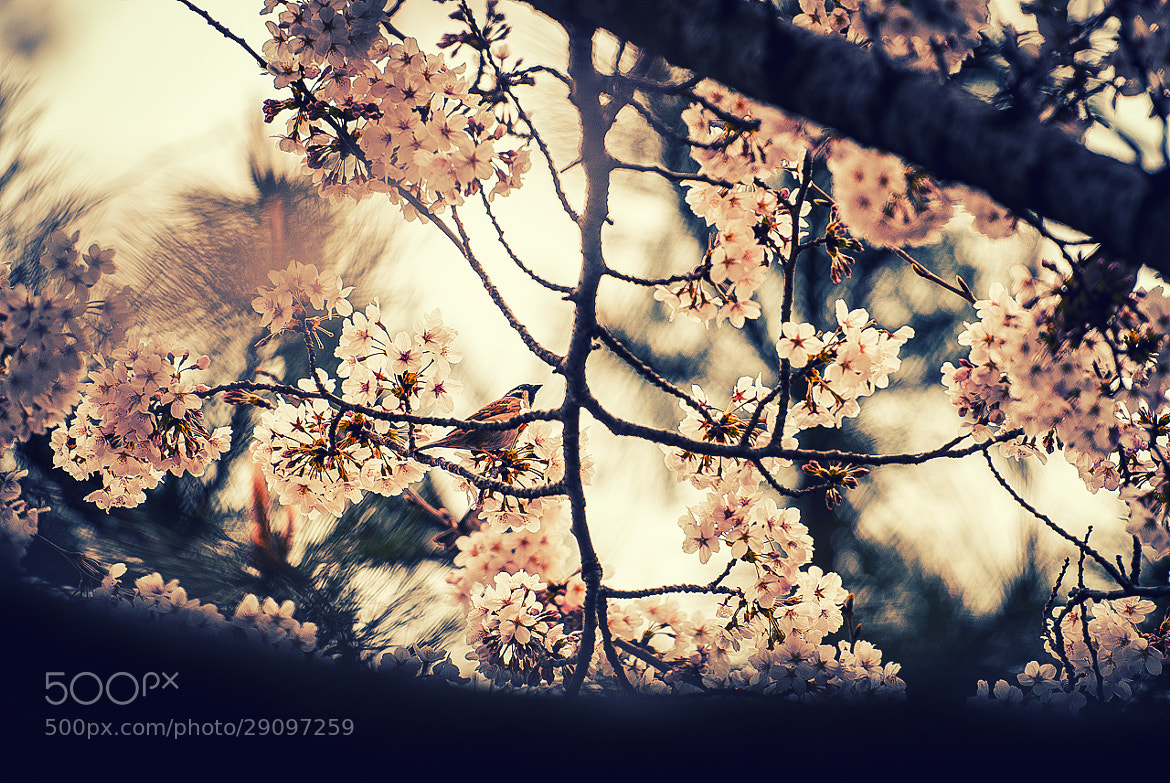 Photograph Spring by photographer photopia on 500px