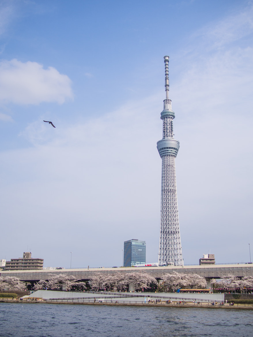 Photograph Sky Tree in Spring by alaine  on 500px
