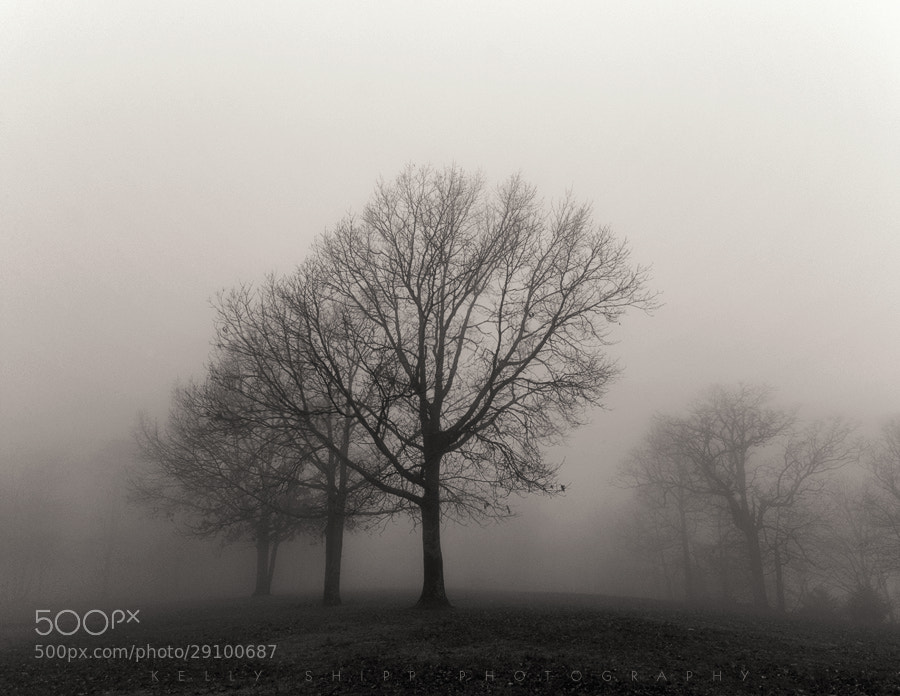 Photograph Fog Formation by Kelly Shipp on 500px