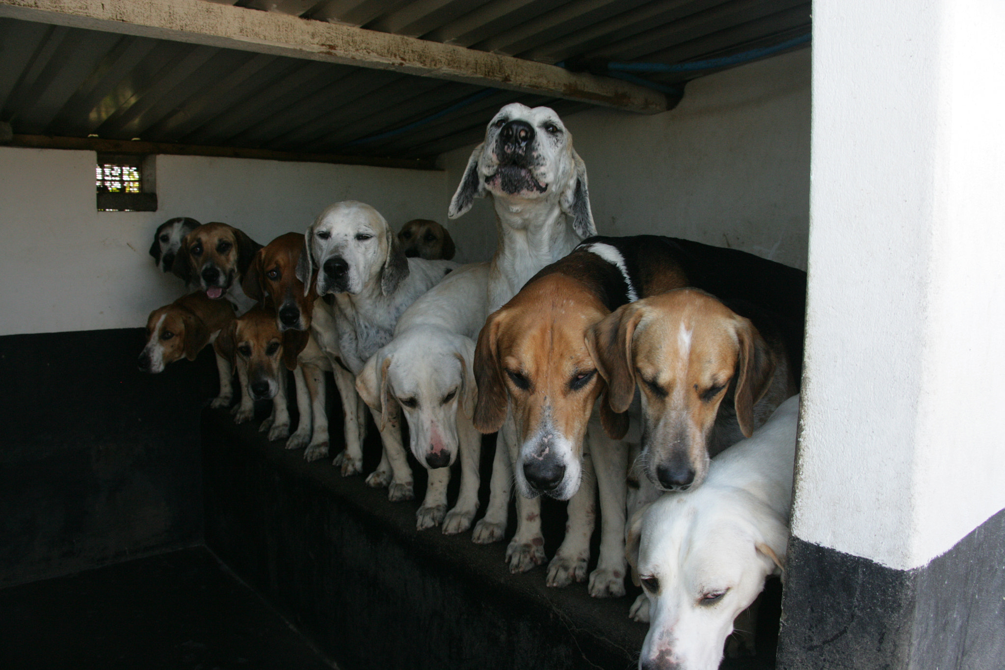 Photograph The Hounds of the Ards Drag Hunt by Scott Graham on 500px