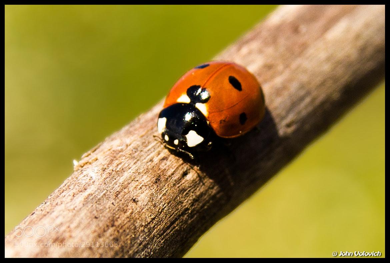 Photograph Ladybug by John Volovich on 500px