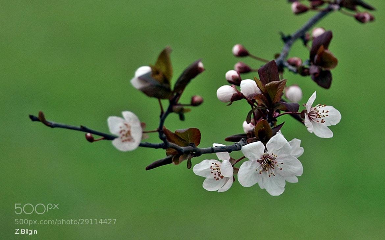 Photograph Spring.... by Zeki Bilgin on 500px