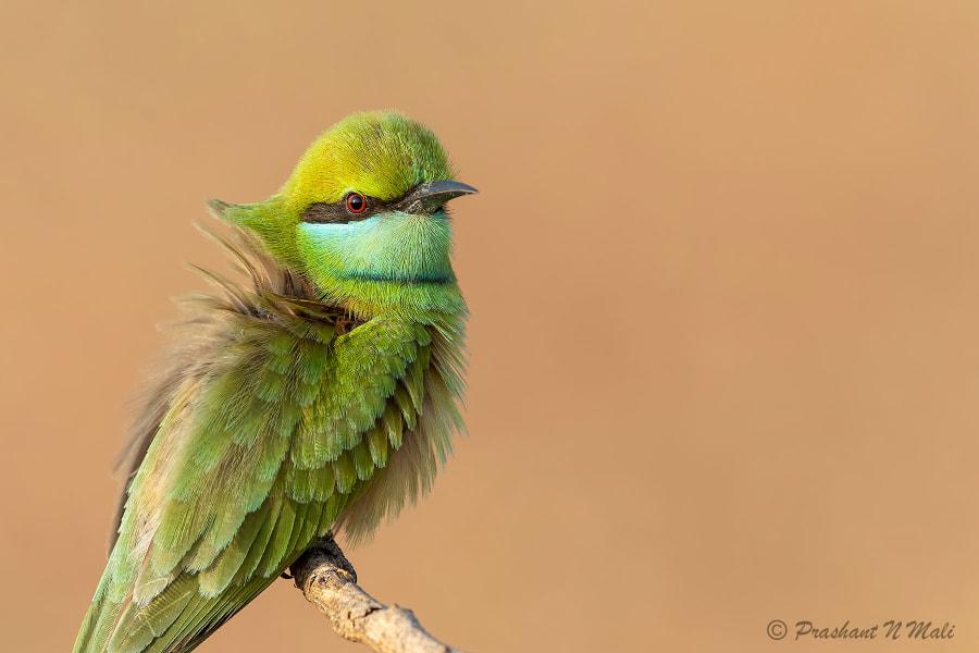 Feathers by Prashant Mali on 500px.com