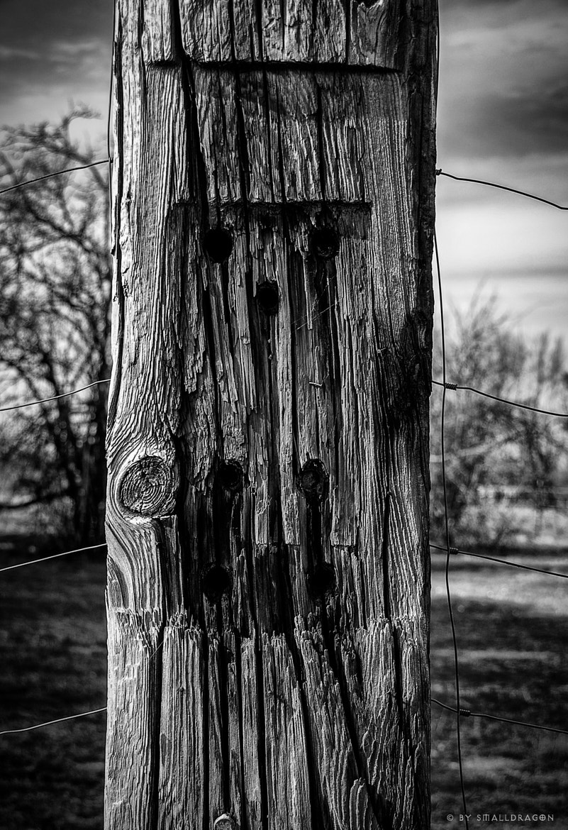 Photograph Wood Pole B&W by Sven Reitis on 500px