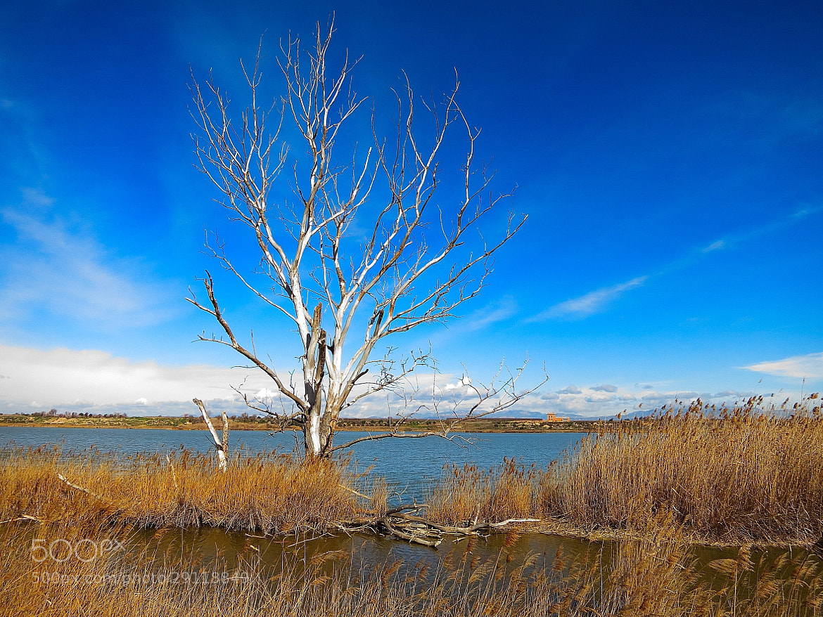 Photograph Arbre a l'Estany by Joan Oliveras on 500px