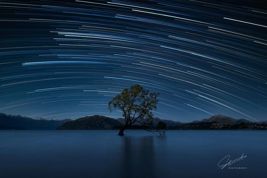 孤独的树 That Wanaka Tree by Stevensbo on 500px.com