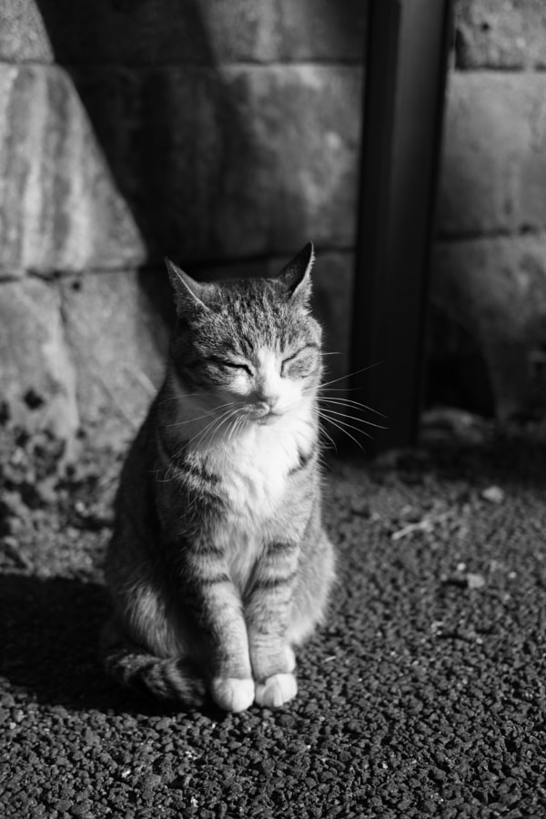 cat by ・tsubu on 500px.com