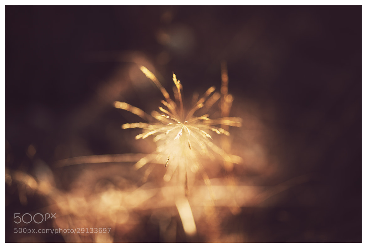 Photograph Fireworks by Tim Nazarov on 500px