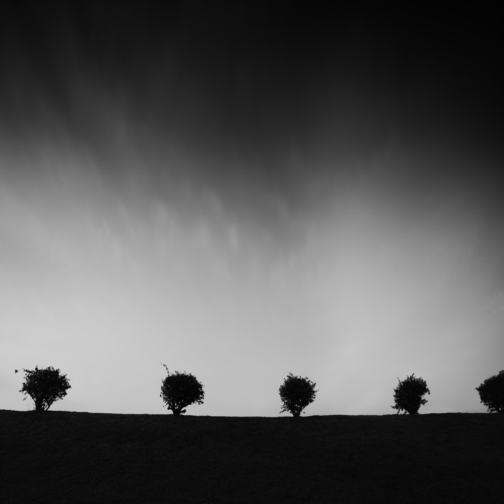 Photograph * 4 and half tree * by Thomas Leong on 500px