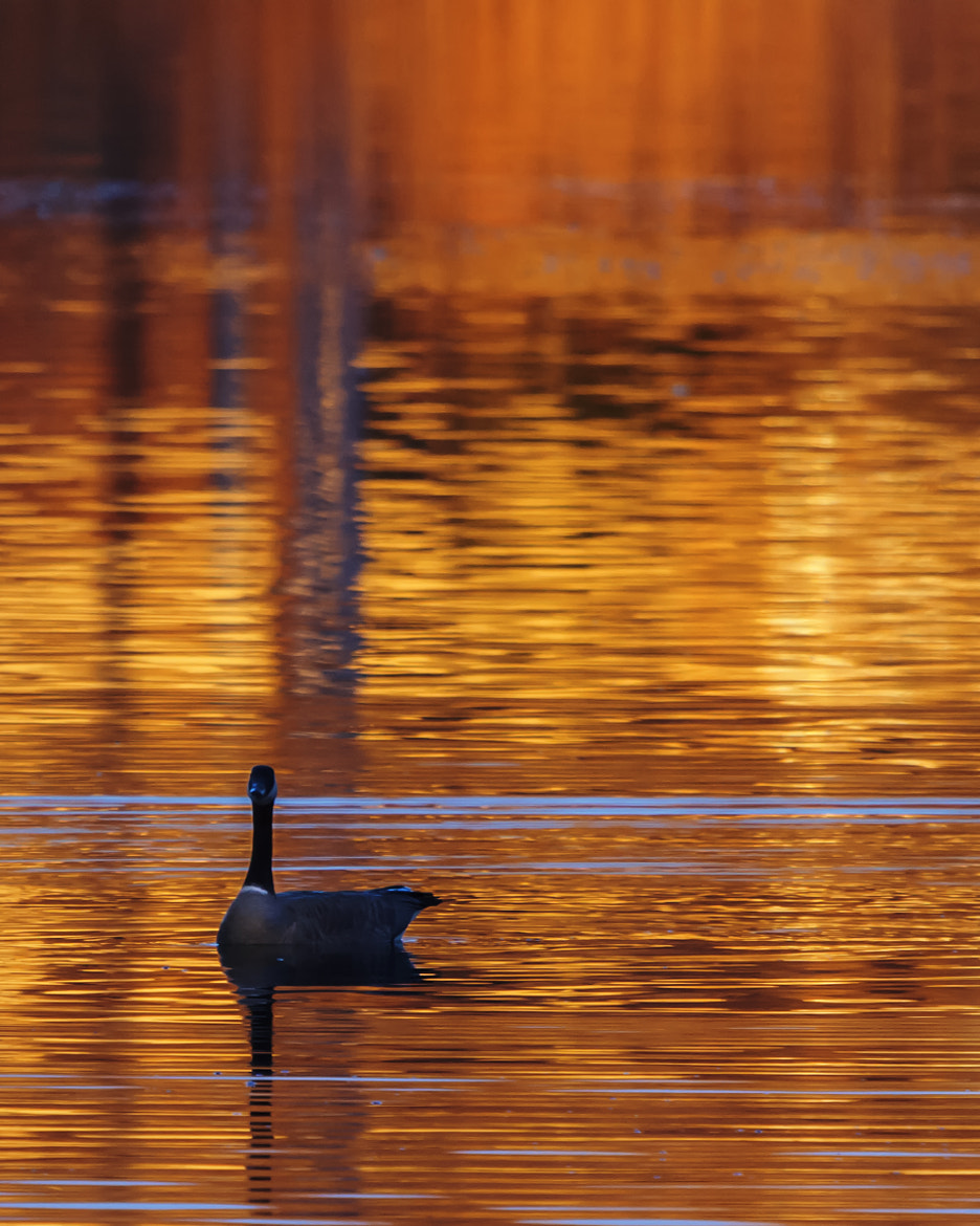Photograph Golden Pond by Brandon Downing on 500px