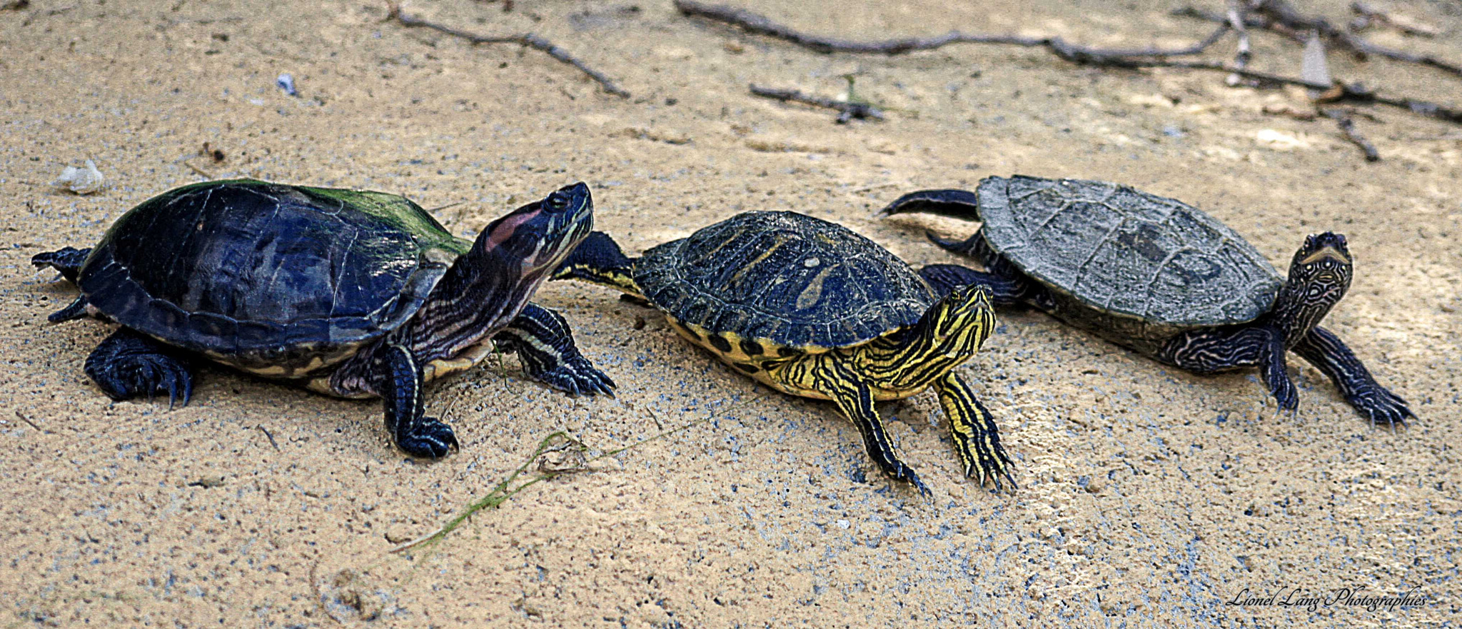 Photograph turtles by Lionel Lang on 500px