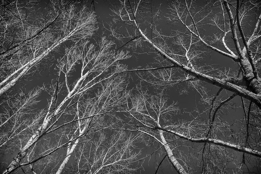 Photograph Trees by Dave Pattinson on 500px
