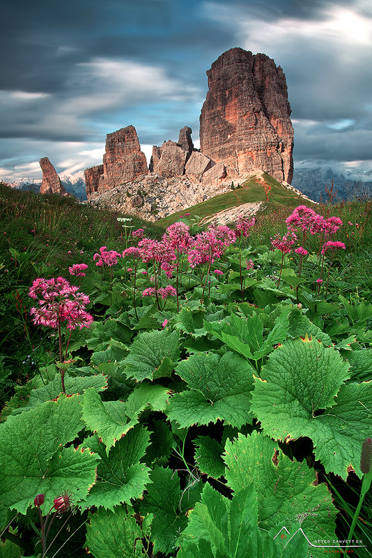 Photograph The Wild Gardeen of Towers by Matteo Zanvettor on 500px
