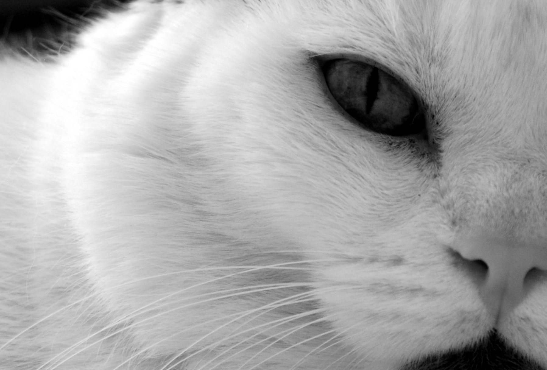 Photograph Kitty by Andrea Leung on 500px