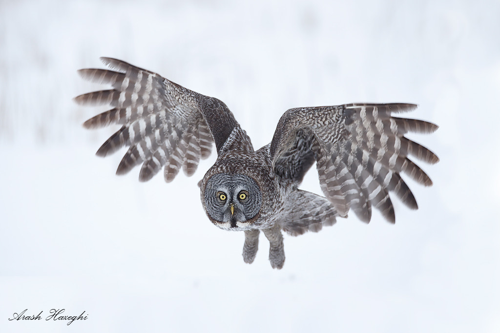 Photograph Flying in snow  by Ari Hazeghi on 500px