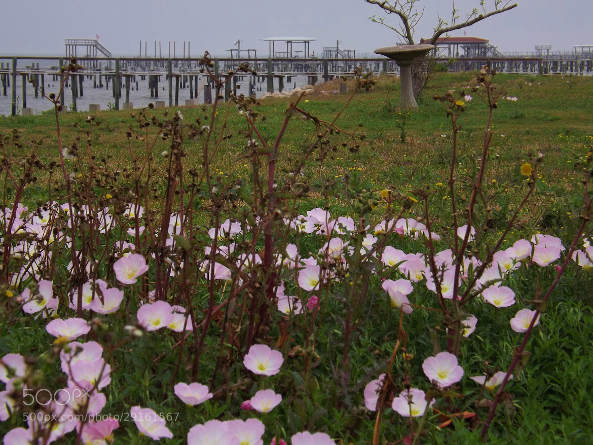Photograph wildflowers on the bay by Shirley Johnson on 500px