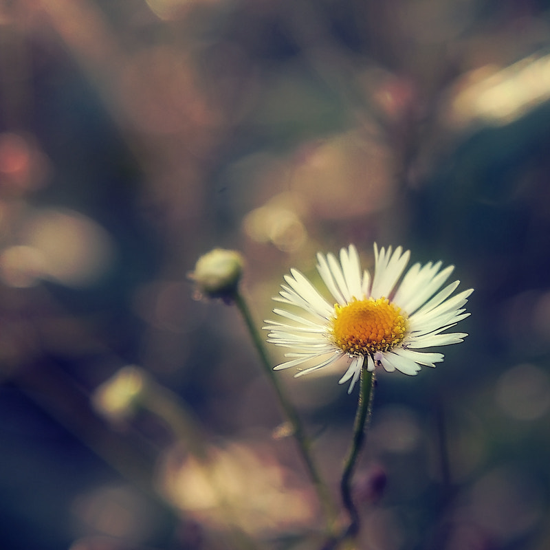 Photograph Untitled by Lana Topoleva on 500px