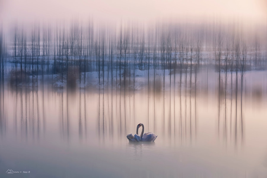 ?????Interdependent love? by Nini—? on 500px.com