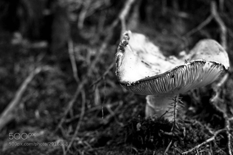 Photograph shroom by Teodor  Cucu on 500px