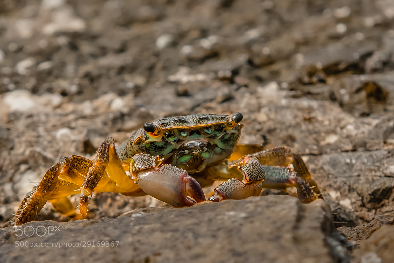 Photograph Crab by Andrej Štojs on 500px