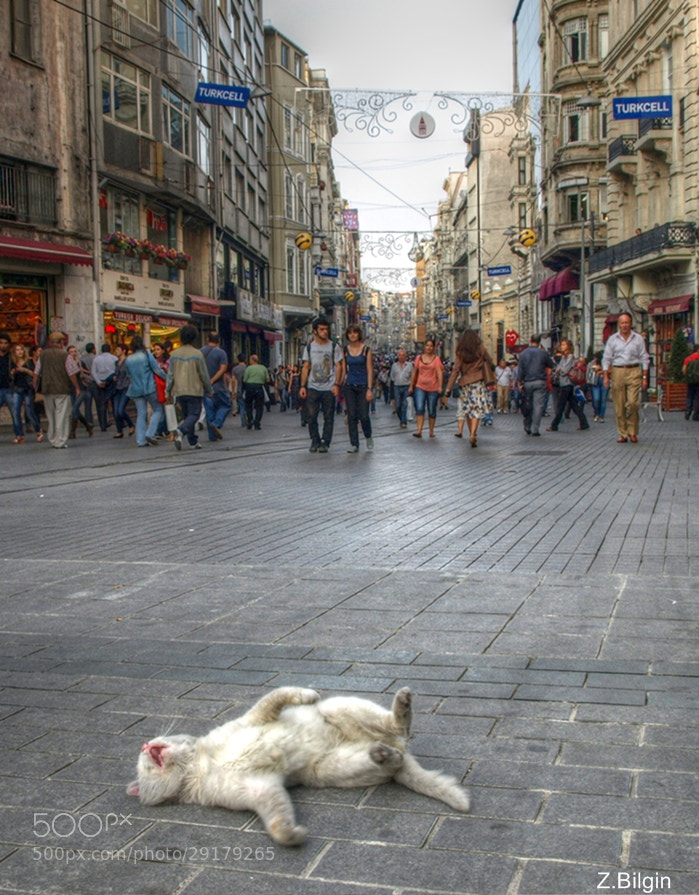 Photograph A cat in Beyoglu               (İstanbul/Turkey) by Zeki Bilgin on 500px