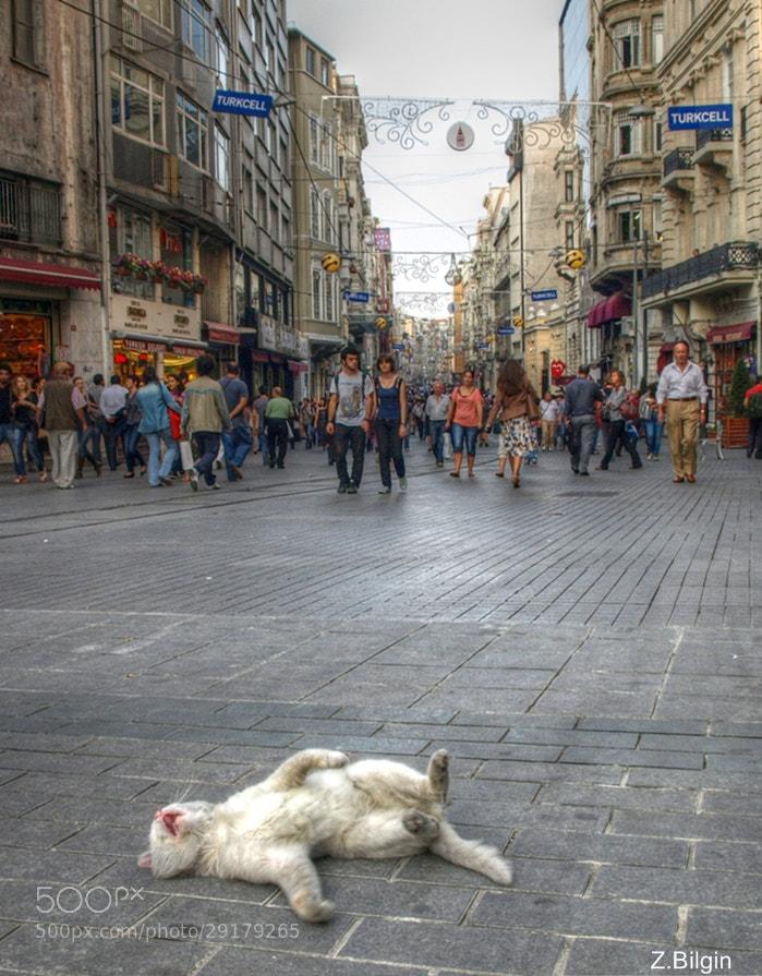Photograph A cat in Beyoglu               (İstanbul/Turkey) by Zeki Bilgin on 500px