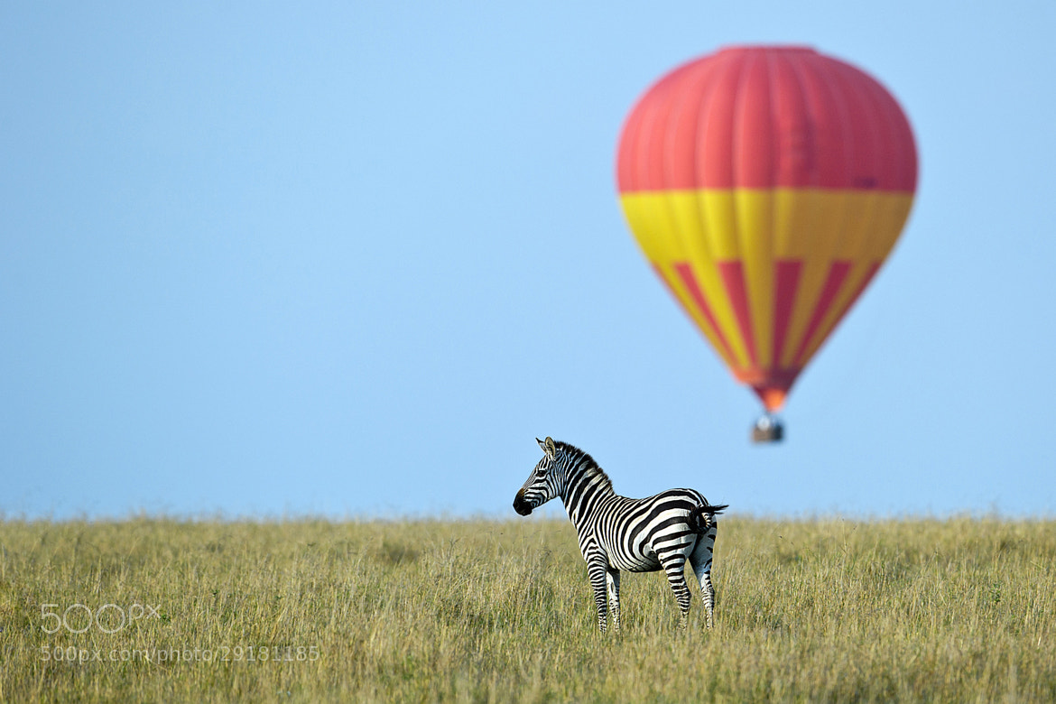 Photograph Serengeti balloon scape by Marc MOL on 500px