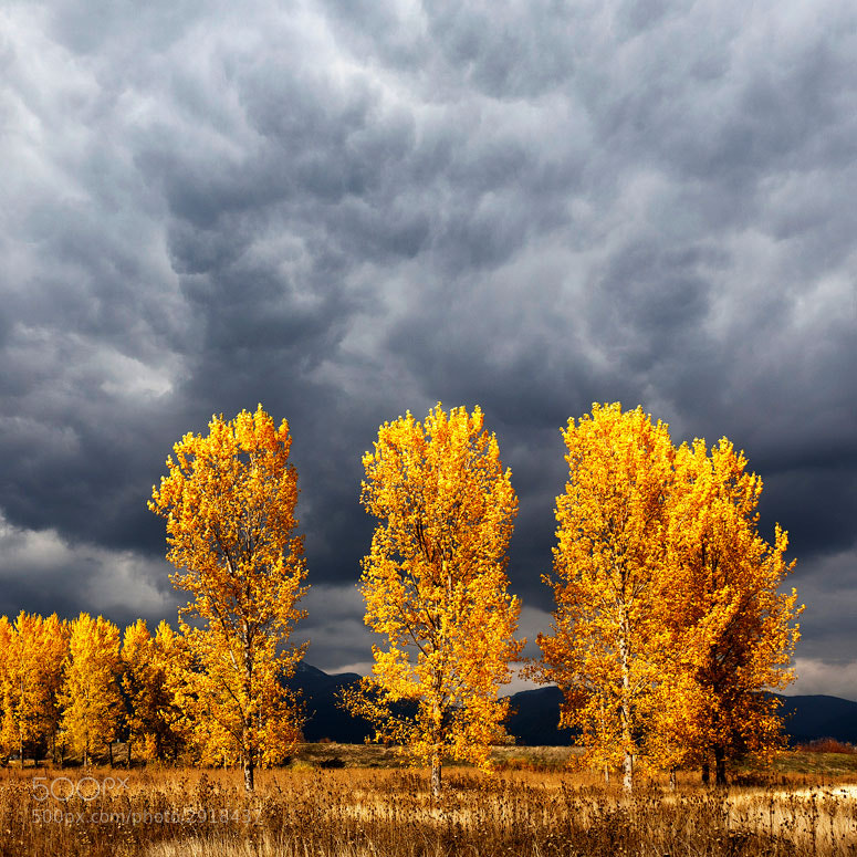 Photograph Light and Darkness by Evgeni Dinev on 500px