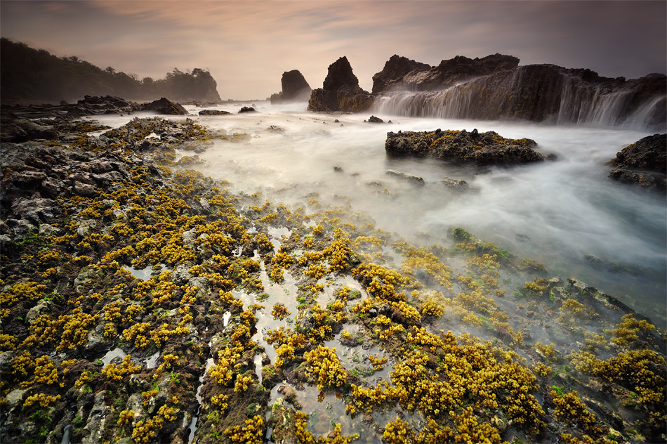 Photograph Flower at the Sea by Gregorius Suhartoyo on 500px