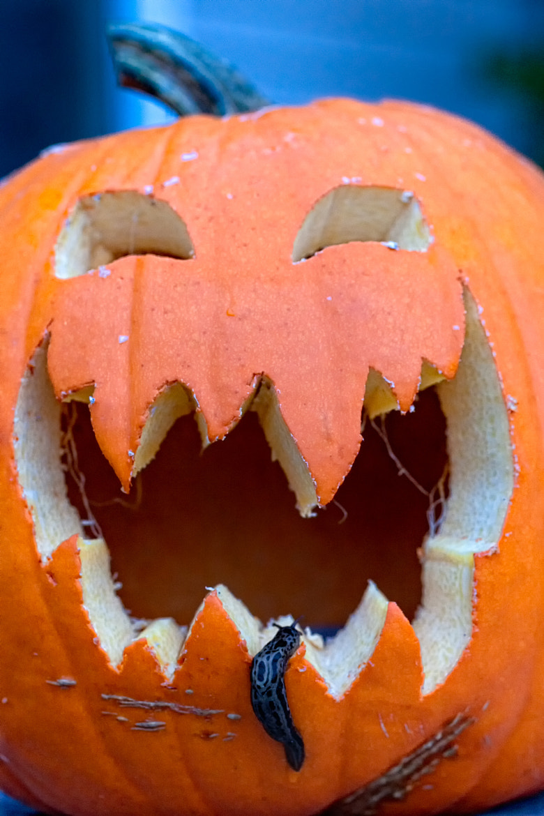 Photograph Happy Halloween by Joseph Calev on 500px