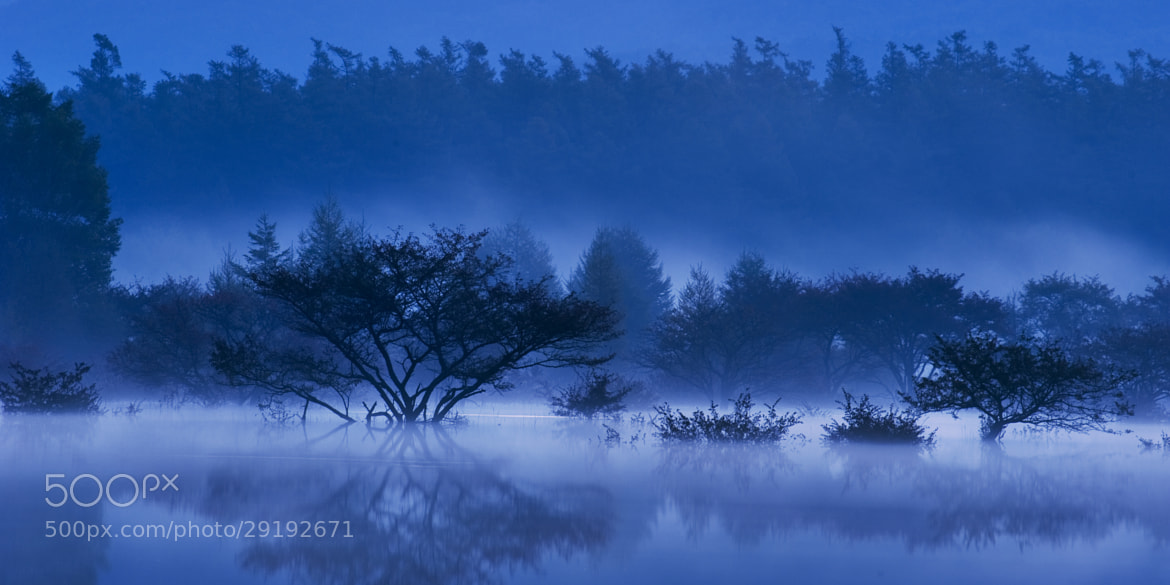 Photograph 止水と草木と(fog on the water)  by hail 2 u  on 500px