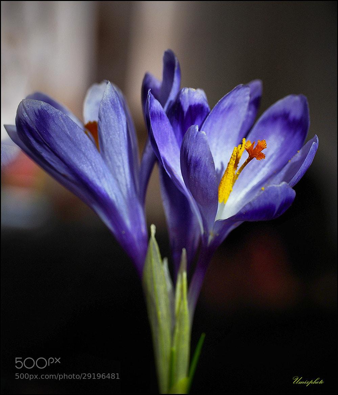 Photograph Spring Mood II. by Jaro Miščevič on 500px