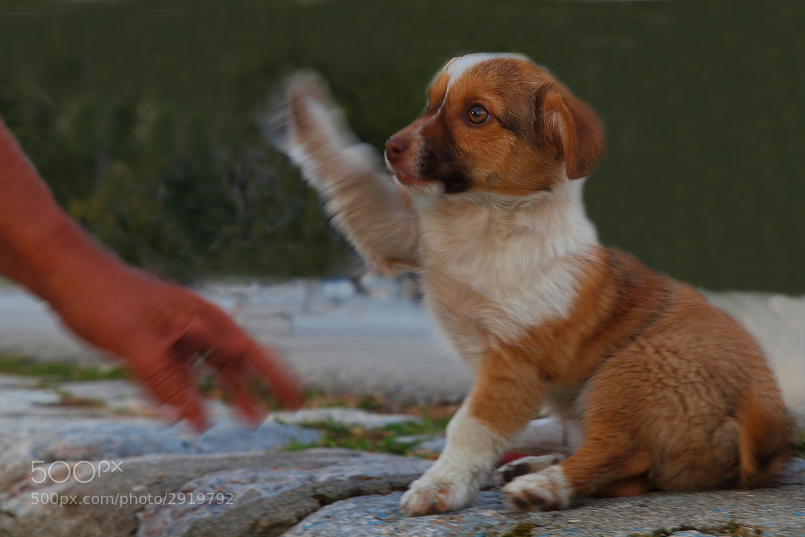 Photograph GIVE ME FIVE! by Mirna Vidić on 500px