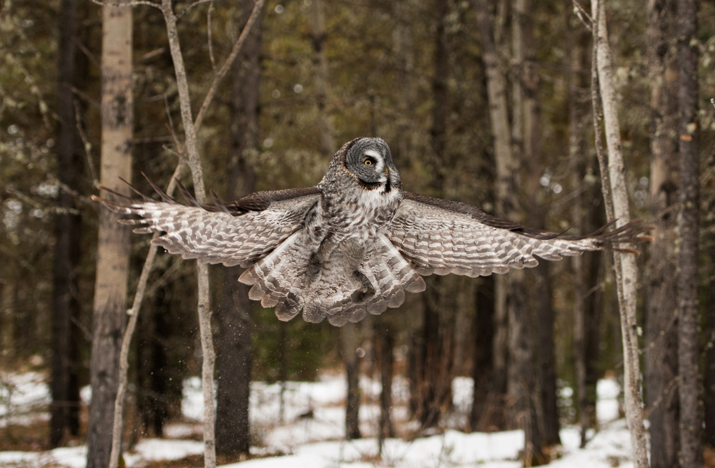 Photograph Take-off ! by Kaitlyn May on 500px
