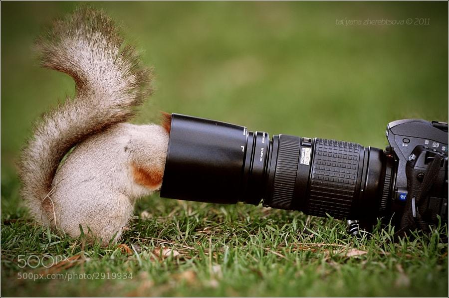 Фотолюбитель by Tat'yana Zherebtsova on 500px.com