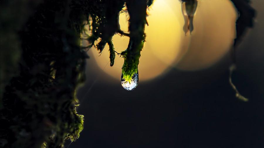 pour l environnement by hubert veujoz on 500px.com