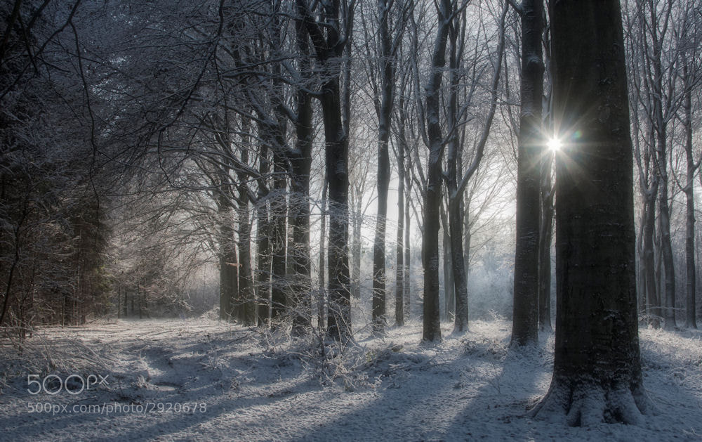 Photograph Winter glory by Bart Ceuppens on 500px