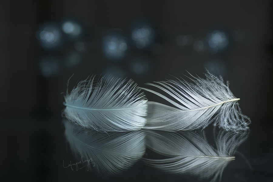 Memories of the heart by Lafugue Logos on 500px.com
