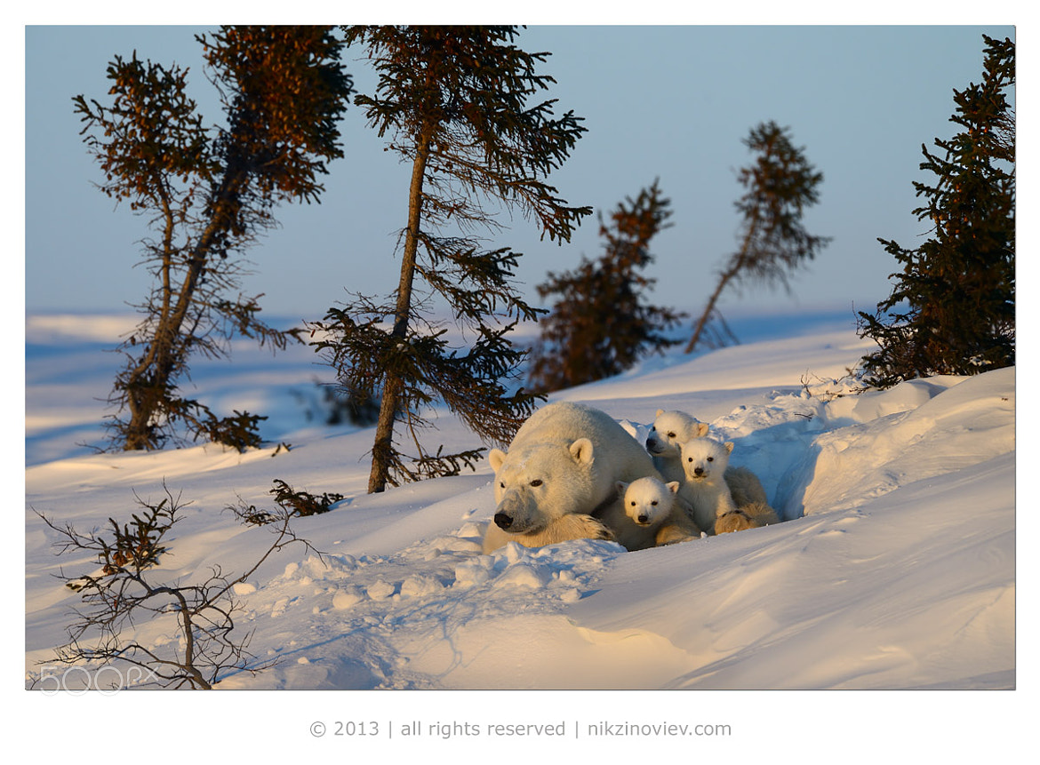 Photograph Watching day end  by Nikolai Zinoviev on 500px