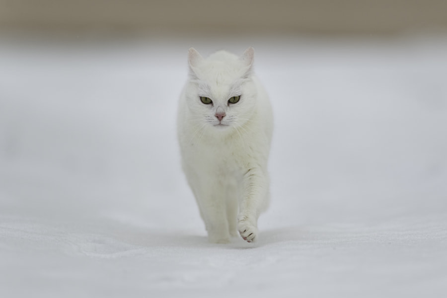 White by Nadja Auer on 500px.com