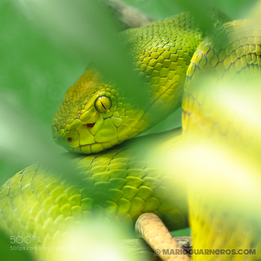 Photograph Fatal Green by Mario Guarneros on 500px