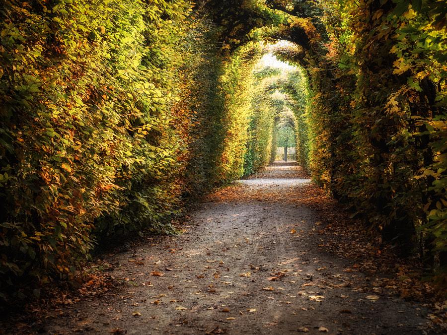 October Walk by Christina Obermaier on 500px.com