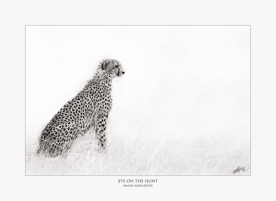 Photograph Eye on the Hunt by Mitchell Krog on 500px