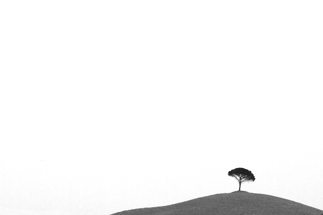 Photograph Lone Tree by James Mackintosh on 500px