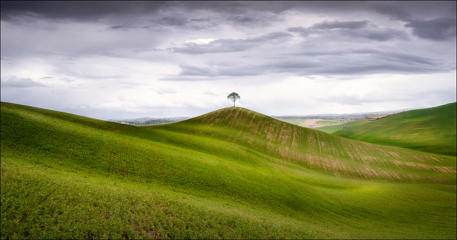 lonely Tree by Georg Scharf on 500px.com