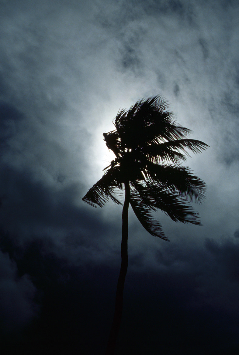 Photograph palm tree - light by Kathrin Voss on 500px