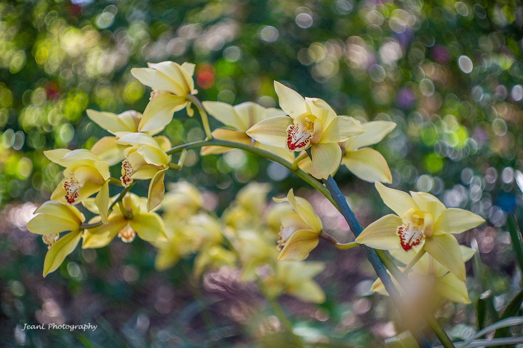 Photograph Orchid by Jean Li on 500px