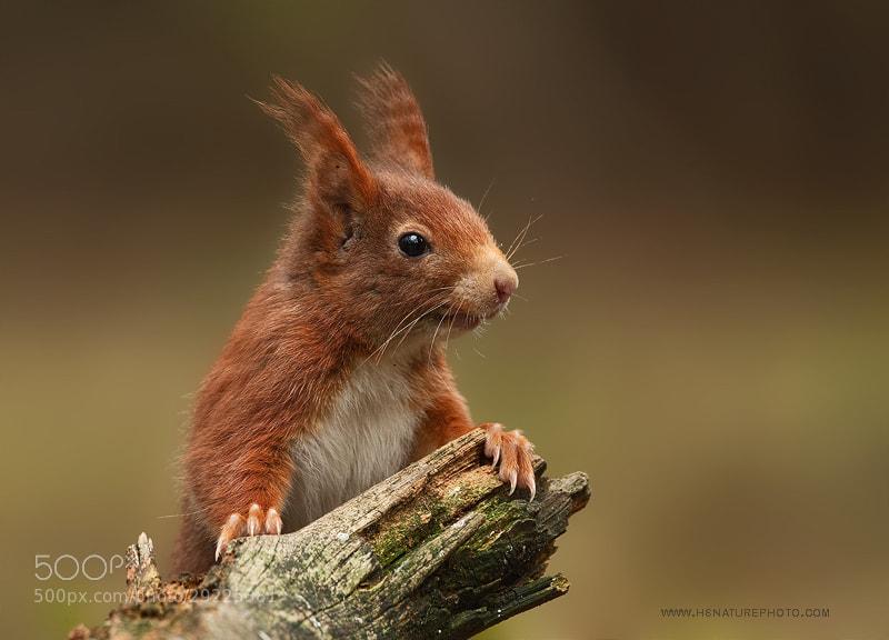 Écureuil toujours aux aguets pour voir le positif